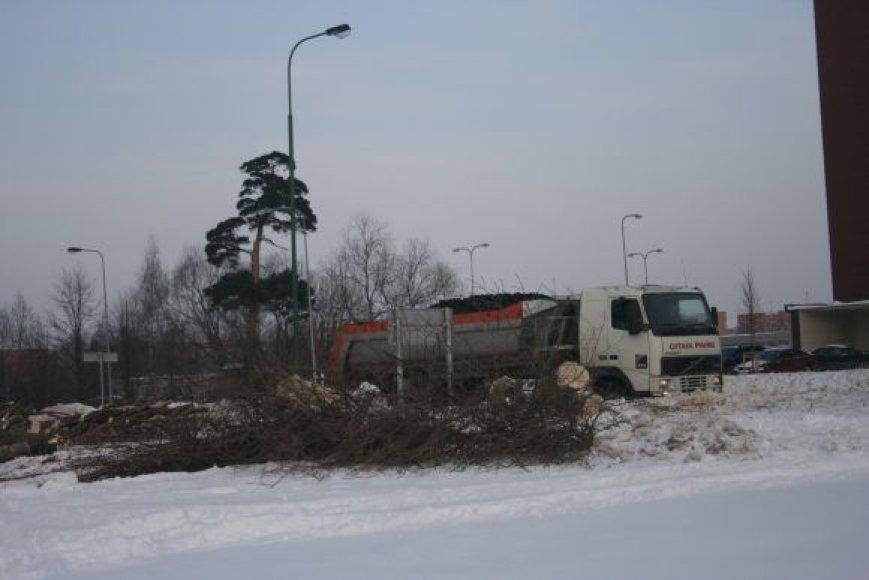 Dėl gatvės rekonstrukcijos kertamus medžius vėliau ketinama atsodinti.