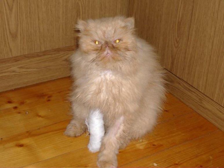 Globėjai katinui davė Persiko vardą. Nors jo priekinė koja dar vis sugipsuota, gyvūnas jaučiasi kur kas geriau.