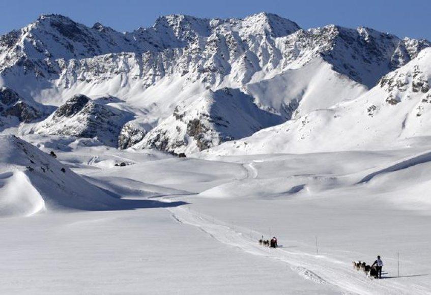 Šunų kinkinių lenktynės Prancūzijos ir Šveicarijos alpėse