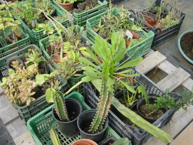 Pašto poste rastos retos orchidėjos