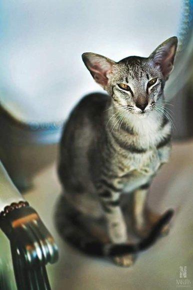 Nakutis Photography nuotr./Liutauro Salasevičiaus katės