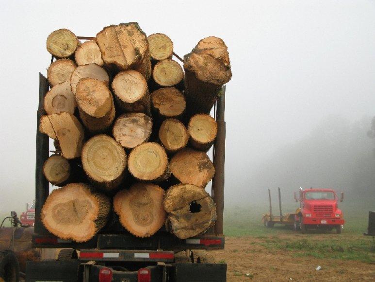 Medienos rąstus gabenantis sunkvežimis
