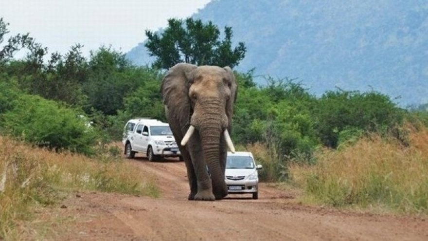 Automobilis drambliui - ne draugas