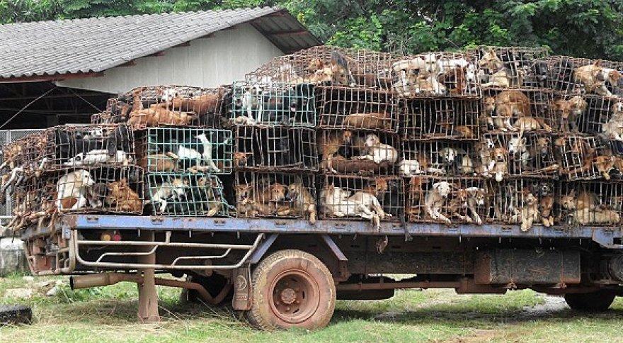 Tailande išgelbėti šunys