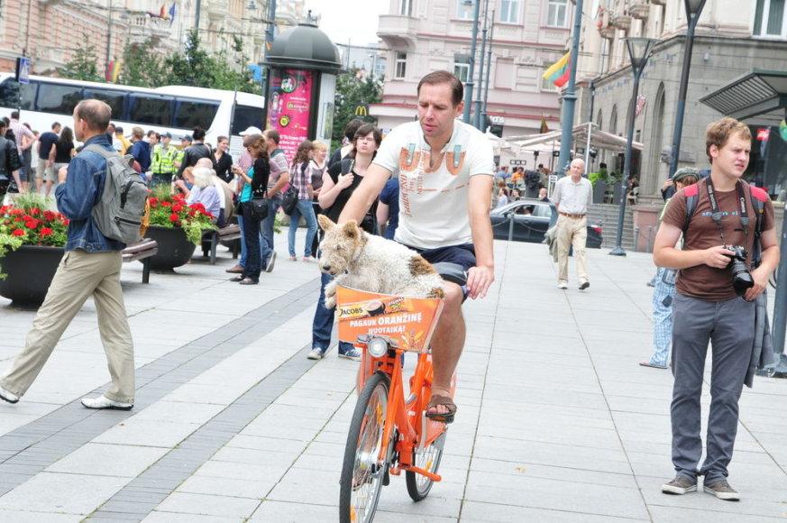 Oranžiniais dviračiais važinėjasi ir dviratininkai, ir net gyvūnai.