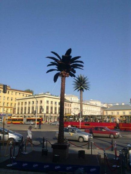 Šokoladinė palmė Varšuvoje