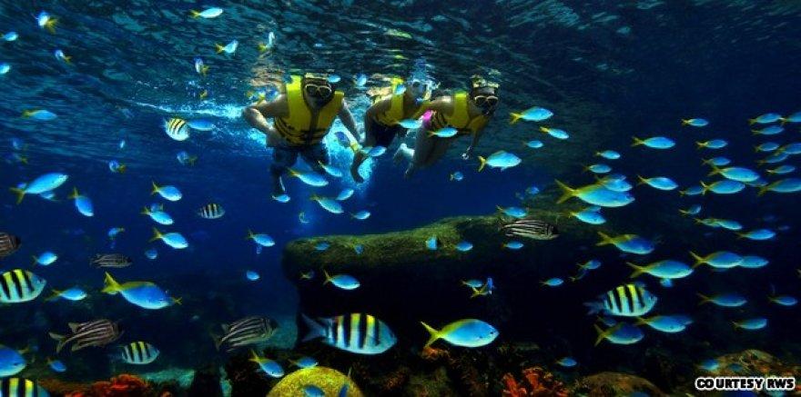 Okeanariumas Singapūre