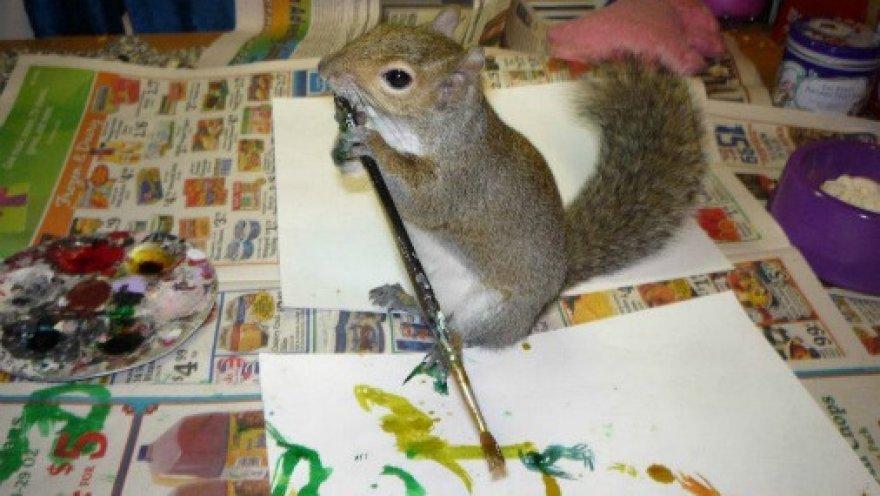 Белка рисует картины и продает их на eBay