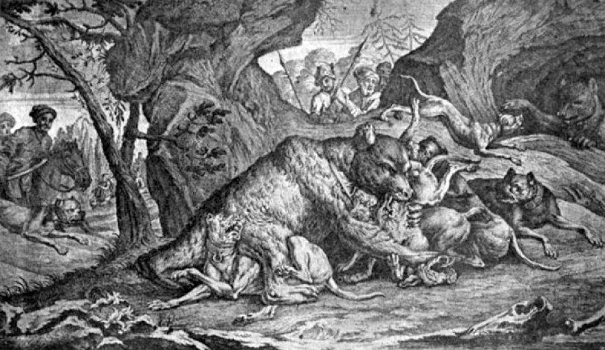 Meškos medžioklė su šunimis.