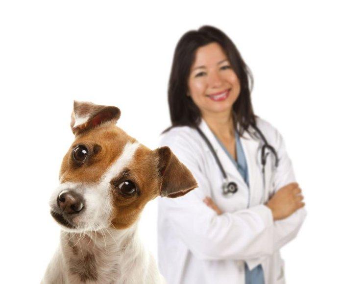 Šuo ir veterinarijos gydytoja