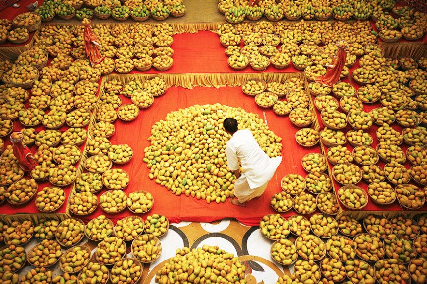 """Delyje (Indija) kasmet vykstantis """"Tarptautinis mango vaisiaus festivalis"""""""