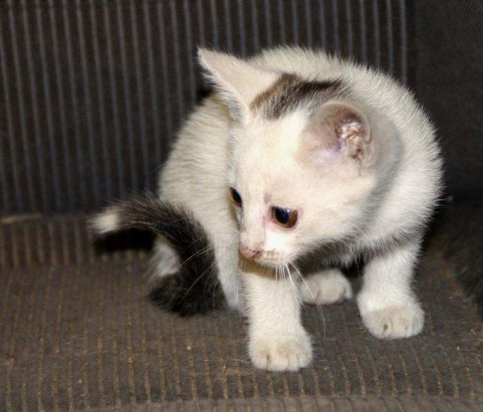 autoserviso kačiukai