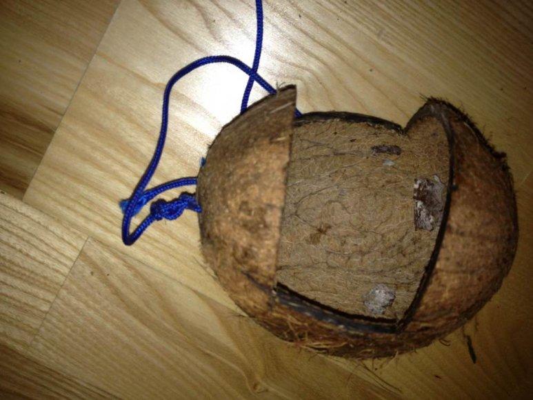 Lesyklėlė iš kokoso