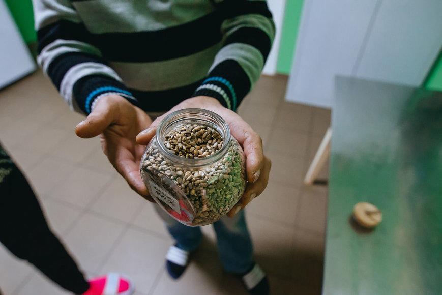T.Preikšos nuotr. /Margainių sėklos, pasižyminčios biologiškai vertingų medžiagų gausa