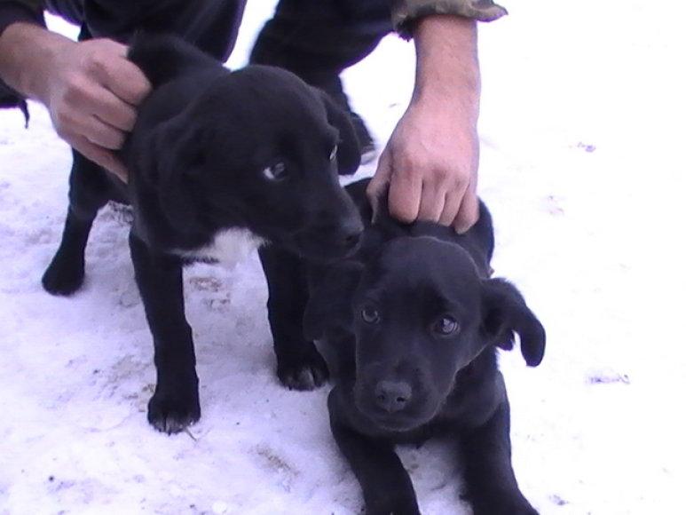 Šunytės, išmestos į žiemą
