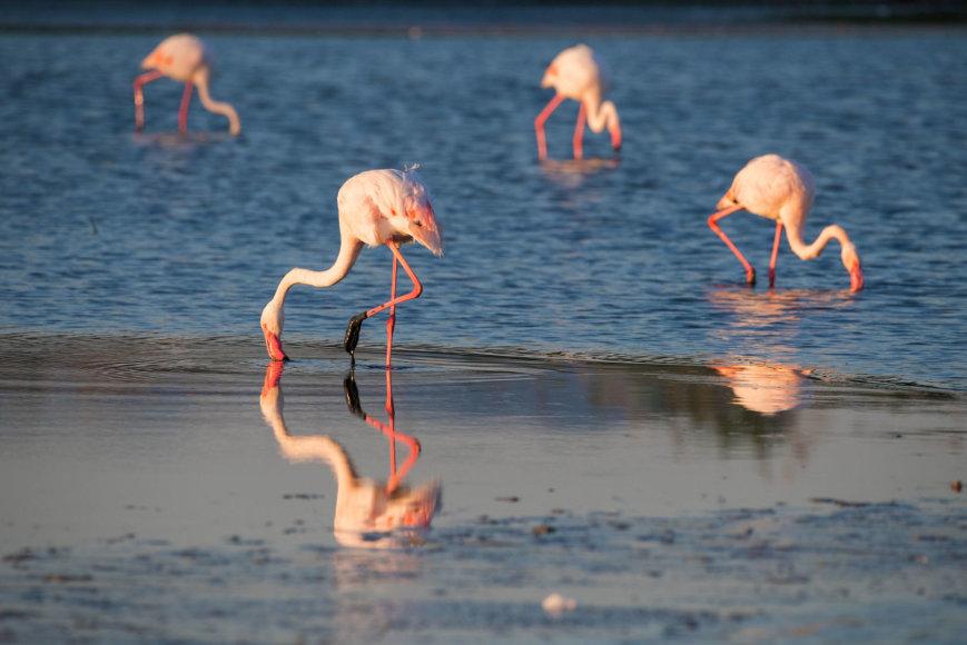 123rf.com/Flamingai