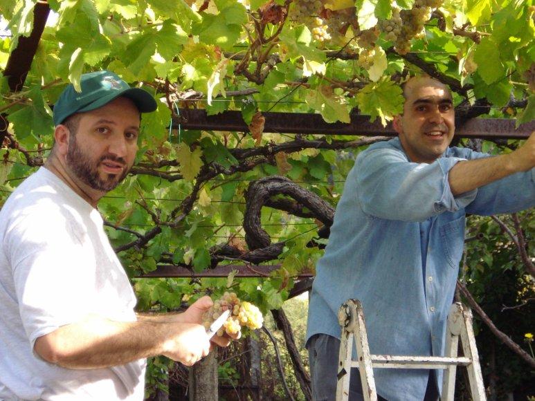 Asmeninio archyvo nuotr./Carlas Bertagninas (kairėje) dirba vynuogyne Italijoje