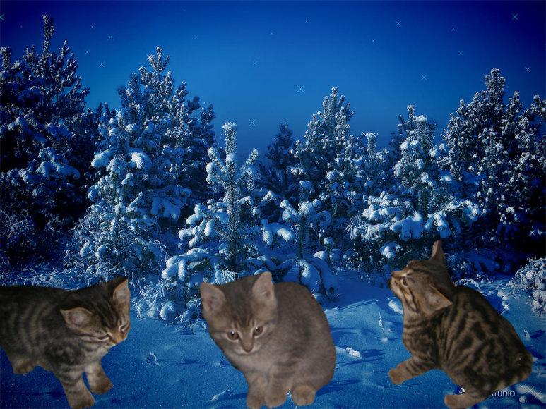 Trys kačiukai