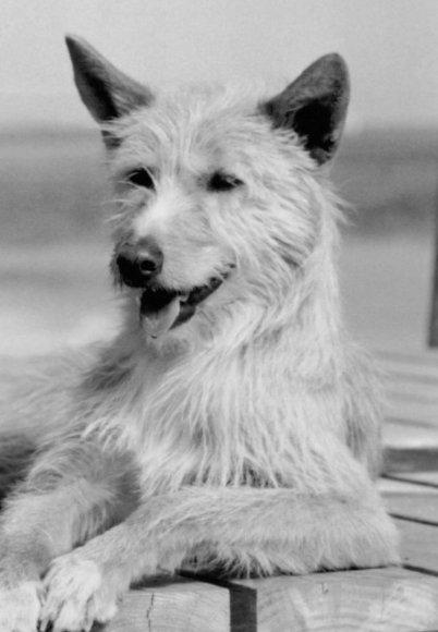 Rastas šuo