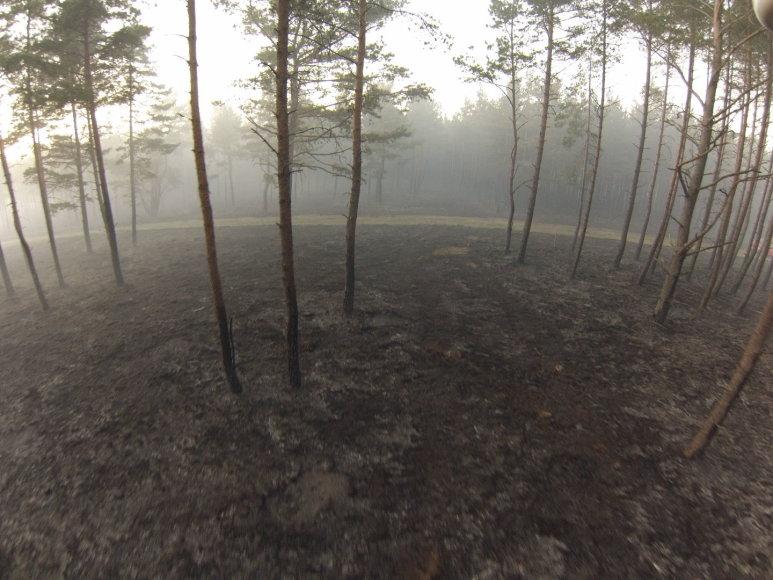 Kuršių nerija po gaisro