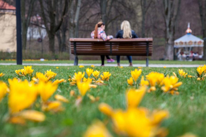 Bernardinų sode vėl sukasi karuselė ir skleidžias pavasario žiedai