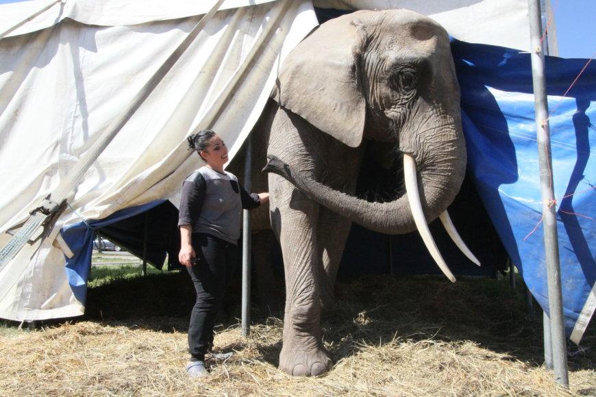 Šiauliuose verda aistros dėl cirko gyvūnų