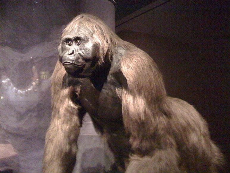 Beždžionė Gigantopithecus
