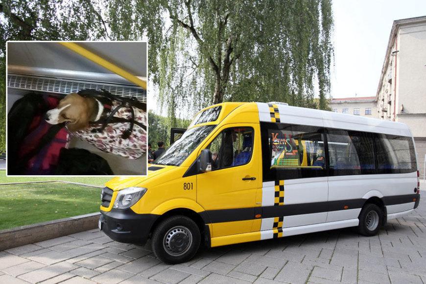 """""""Kautros"""" maršrutinio taksi vairuotojas atsisakė vežti keleivę su šunimi"""