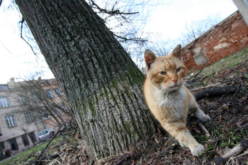 Katinas įstrigo medyje.