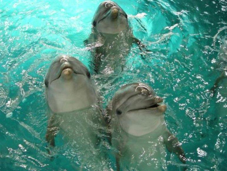 Jūrų muziejus neketina atiduoti delfinų.