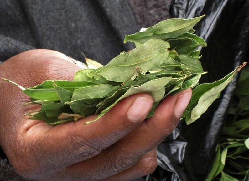 Kokos lapai