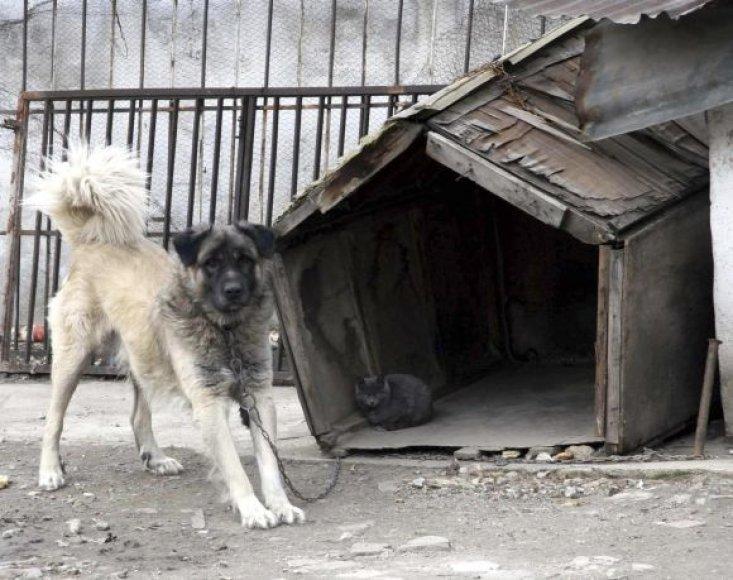 Šuo ir katė