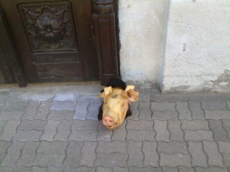 Prie Kauno sinagogos palikta kiaulės galva.