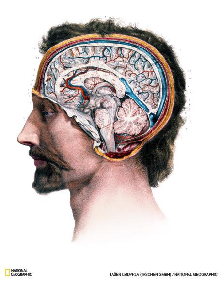Mokslininkai šimtmečius studijavo smegenis, tačiau iki XIX a. pradžios jie galėjo išskirti tik plika akimi matomas sritis. Su naujomis technologijomis mokslininkams pavyksta prasiskverbti iki nematomų smegenų dalių.