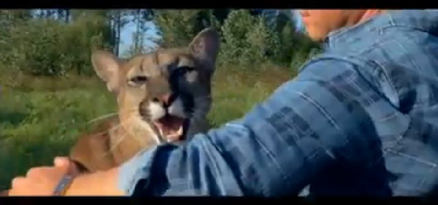 "Egidijus Knispelis ""TV pagalbos"" anonse filmavosi su puma"