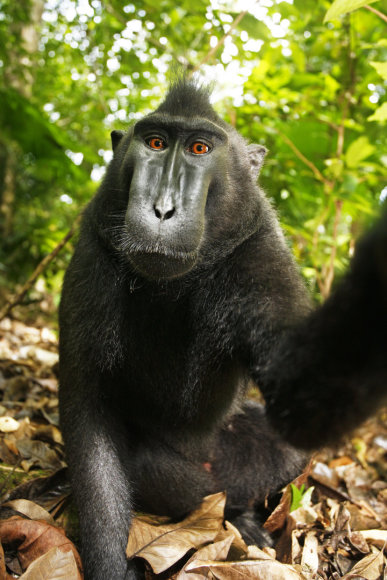 Beždžionės Naruto asmenukė
