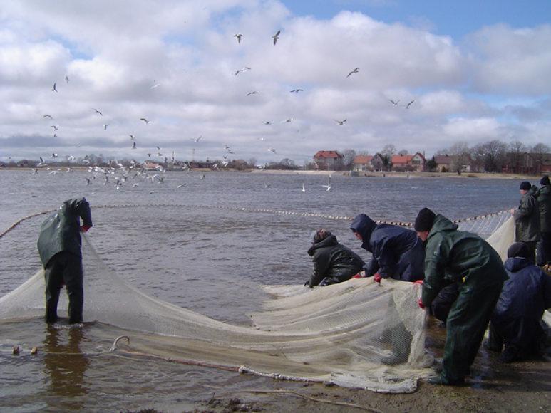 Prieš pora metų pamario žvejai vos spėjo traukti stintas iš tinklų.