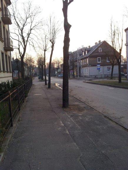 Nugenėti medžiai A.Mackevičiaus gatvėje, skaitytojo Gedimino nuotr.