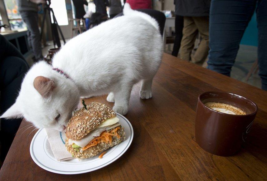 Kačių kavinė Niujorke