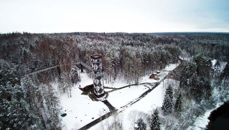 Medžių lajų takas žiemą
