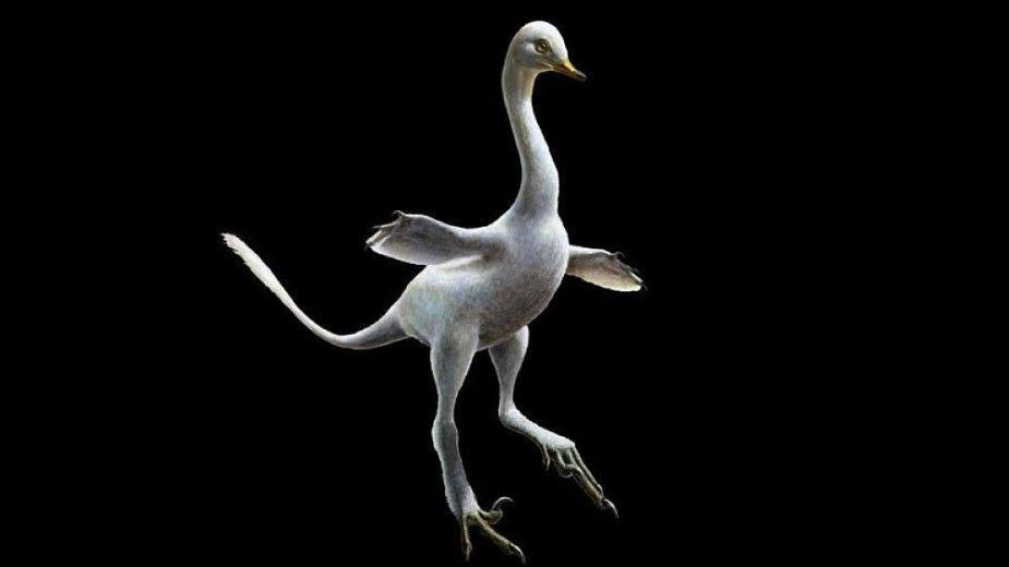 Pirmasis ir vaikščiojantis, ir plaukiojantis dinozauras Halszkaraptor escuilliei