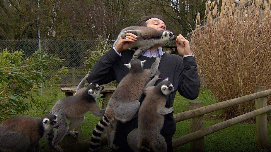 BBC reporterį zoologijos sode užpuolė lemūrai