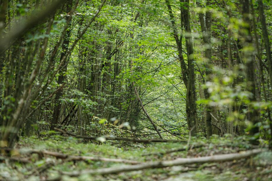 Eriko Ovčarenko / 15min nuotr./Buktos miškas
