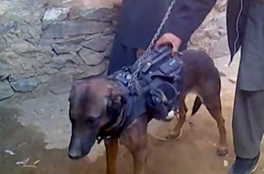 Talibano kovotojai įkaitu paėmė šunį