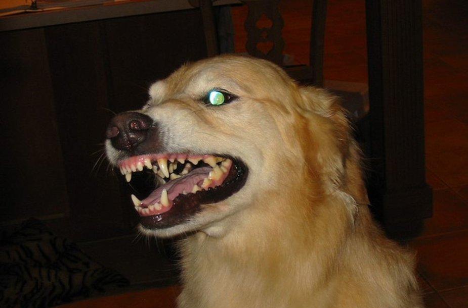 Rodydamas tokį elgesį šuo nori, kad jį gąsdinantis objektas kuo greičiau pasitrauktų.