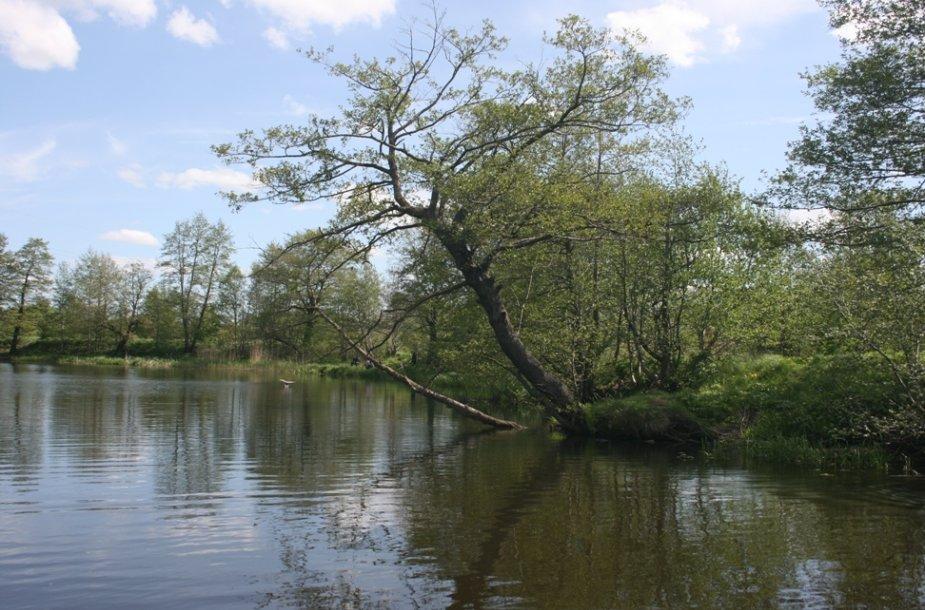 Vaizdai iš Danės upės