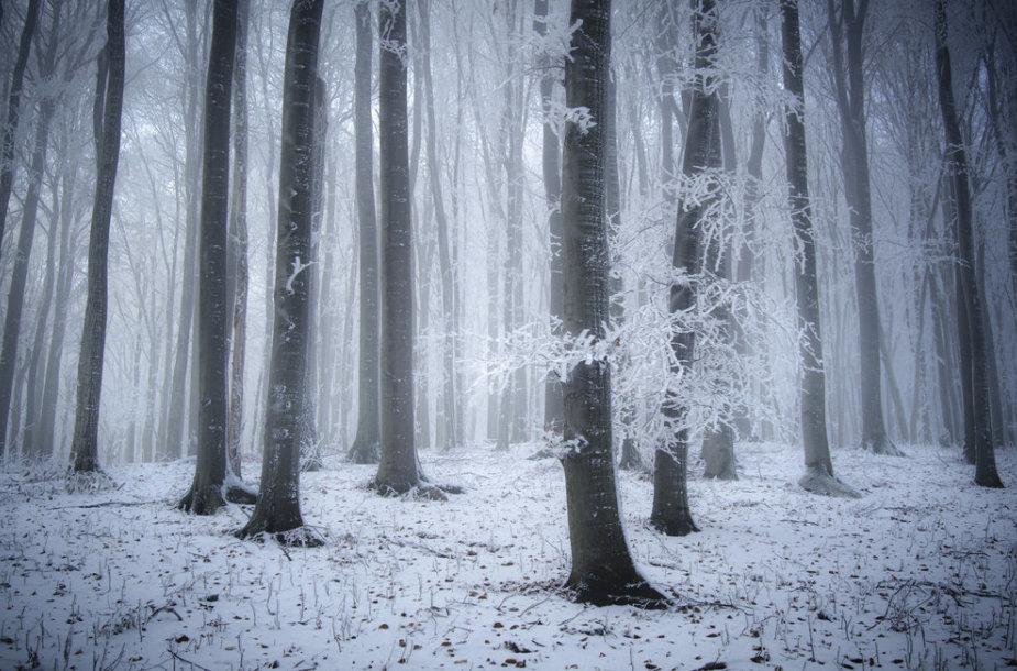 Miškas žiemą