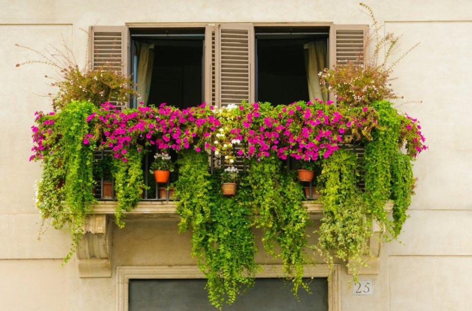 Daržas balkone