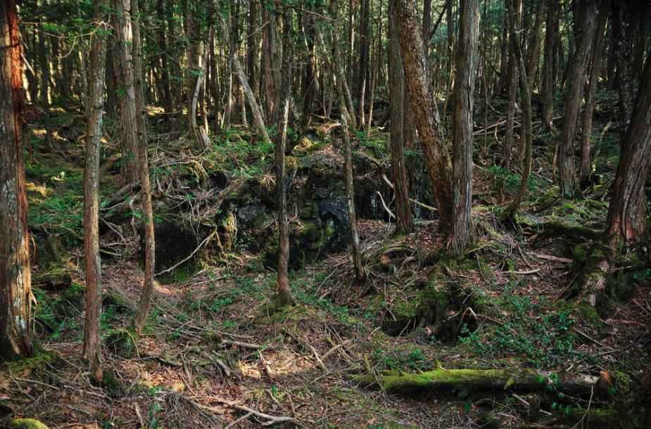 Aokigaharos savižudžių miškas Japonijoje
