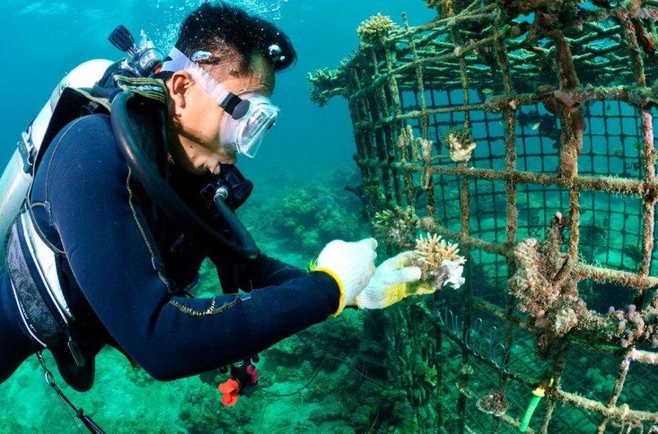 Koraliniai rifai